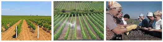 виноградство на земле