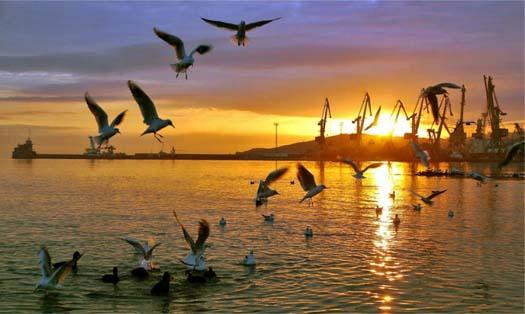 Феодосия с ее животным миром у моря