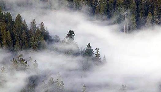 Влажность воздуха в природе