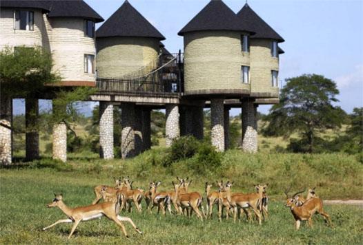 Кения и животный мир