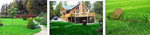 выбор газона возле дома